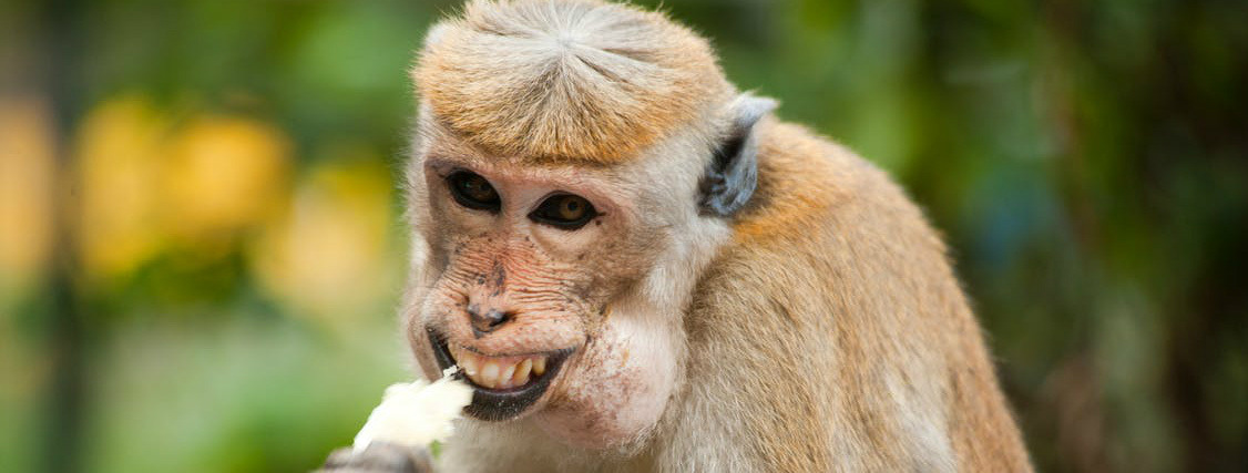 issues with the monkey selfie and copyright law